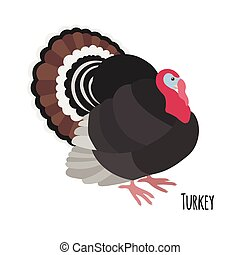 Cartoon turkey isolated on white background