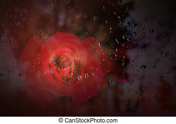 Abstract romantic red rose with rain drop on glass mirror and copy space