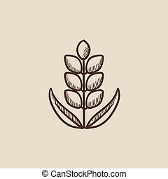 Wheat sketch icon. - Wheat sketch icon for web, mobile and...