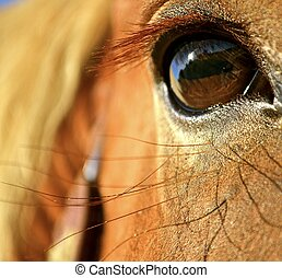 Eye of the Clydesdale