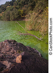 Cyanobacteria in Taihu lake - Serious pollution in China's...