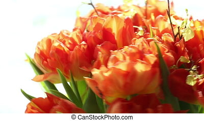 Beautiful bouquet of orange tulips quickly rotating -...