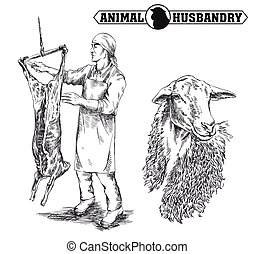 butcher cut up the carcass of a sheep - hand drawn sketch of...