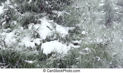 """snowy day, snow on pine tree"""