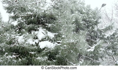 quot;snowy day, snow on pine treequot; - snowy day, snow on...