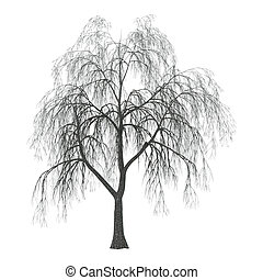 3D Illustration Willow on White - 3D Illustration of a...