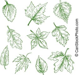 Sketched isolated green tree leaves - Sketched green tree...