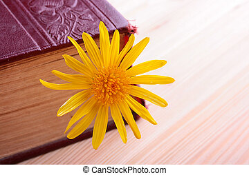 Yellow flower as a sun symbol in the old bible