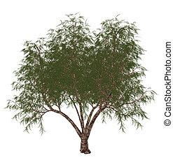 tamarix, render, árbol, -, francés, gallica, tamarisk, 3D...