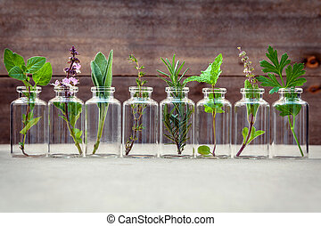 Bottle of essential oil with herbs holy basil flower, basil...
