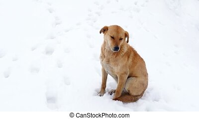 """lonely dog on freezing cold, over snow"""