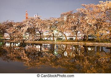 hermoso, jardín, flor, Cereza, árboles, primavera, Durante,...
