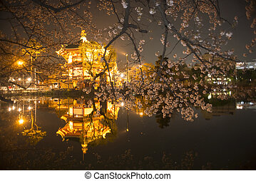 Nigth, hermoso, Cereza, árboles, en, flor, y, pagoda,...