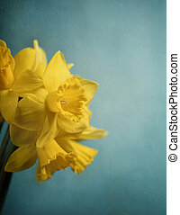 Narcissus - Beautiful fresh narcissus in front of rustic...