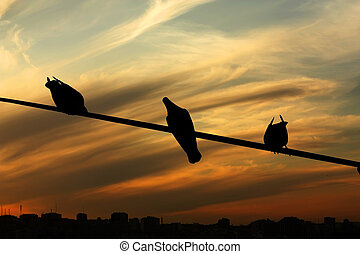 Pigeons on a telephone line - Several pigeons resting on a...
