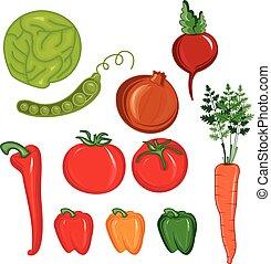 Illustration set of vegetables. vector