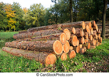 Forest logging - Wooden Logs in a forest