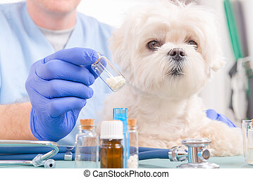 Homeopathy for a dog - Vet holding homeopathic globules for...