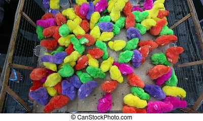 Chickens bright different colored paint in a box