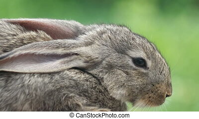 Rabbit Beautiful animal of wild nature - Portrait of...