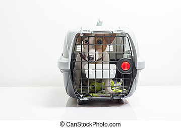 Cute dog in carrier - Young dog jack russel terrier in...