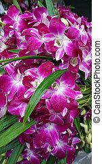 Pak Khlong Talat flower market -