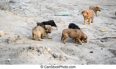 Many cute colorful mongrel puppies being fed outdoors -...