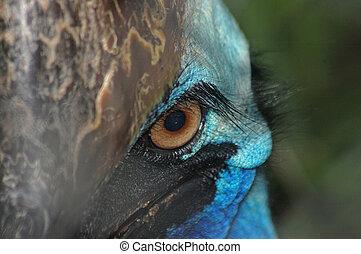Cassowary portrait - Portrait of cassowary, Casuarius...