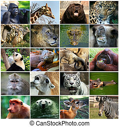 Collage with different animal faces