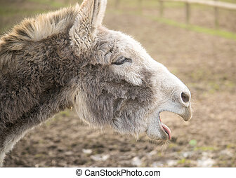 Closeup donkey portrait - Closeup profile portrait of a...