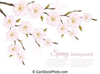 Spring background with a sakura branch. Vector.