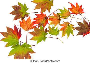 colorful autumn leaves - the colorful messengers of autumn...