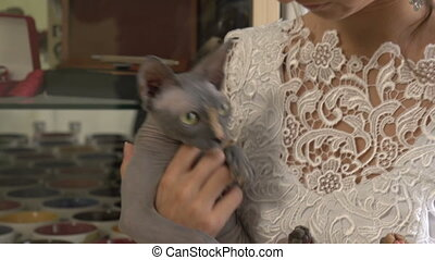 Bald cat on the hands of the bride