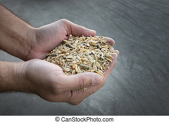 Cattle feed inhuman hands - Close up of farmers hand holding...
