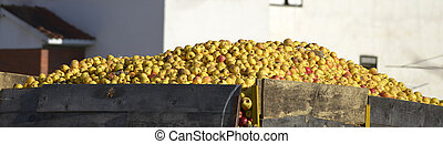 Industrial apples in a truck