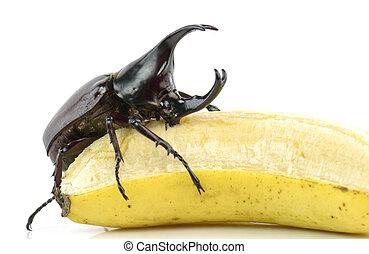 Beetle,Rhinoceros beetle, Rhino beetle, Hercules beetle,...
