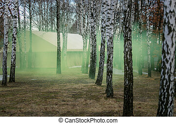 Mysterious forest at morning covered by green smoke -...