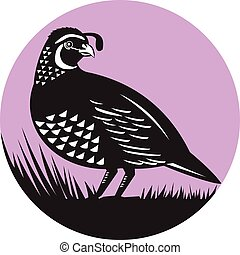 California Valley Quail Bird Circle Retro - Illustration of...