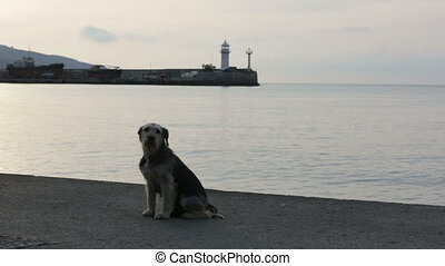 Street dog on beach in twilight - Cute street dog sitting in...