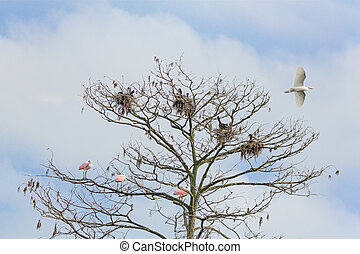 Assorted Birds and Tree - A tree stands tall against a...
