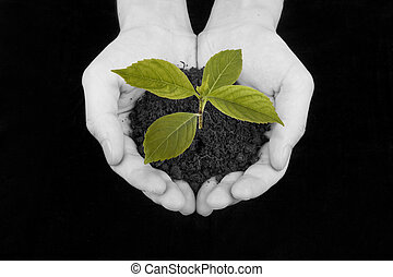 Plant in hand - Agriculture. plant in a hand over blue sky