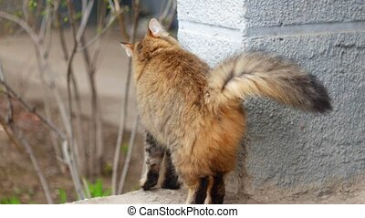 Lady cat arched its back and rub against building wall...