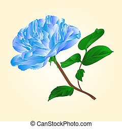 Blue  rose stem vector.eps