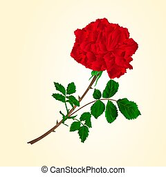 Red rose stem vector.eps