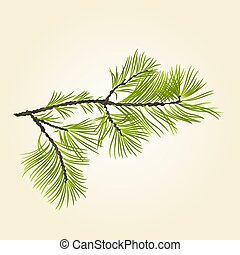 Branch Pine conifer vector.eps