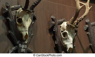 Deer Skulls on Wall - Deer skulls on trophy plates hanged on...
