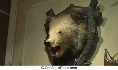 Hunted Bear Trophy on Wall - Bear head on the wall mounted...