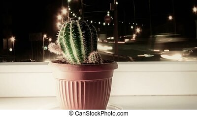 Cactus on window and car Lights out of focus.