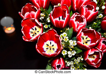 Bouquet of red tulips - The revealed buds of red tulips...