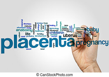 Placenta word cloud concept